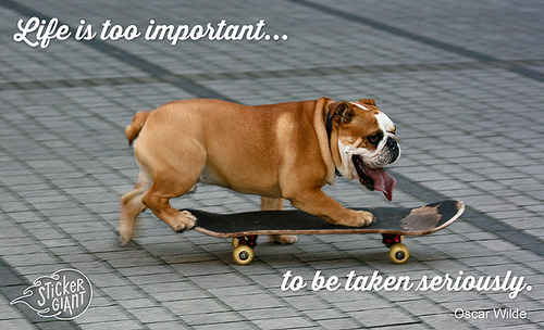 Cool Skateboarding Dog