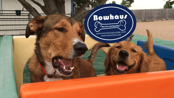 SG-Bowhaus-Dog-Daycare-Boarding