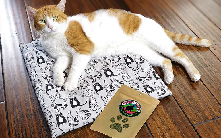 Tucker-the-cat-with-a-package-of-Skinny-Pete's-Catnip-and-modeling-on-the-Cat-Mat