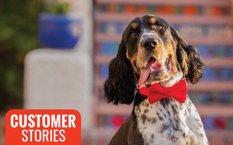 Collar-Me-Charming-dog-red-bowtie